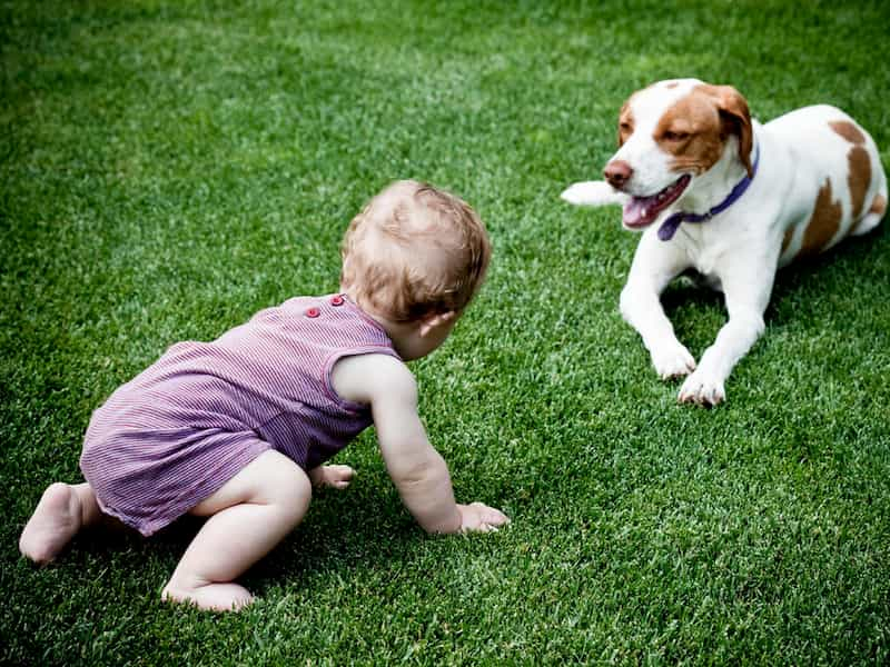 kid with dog on grass
