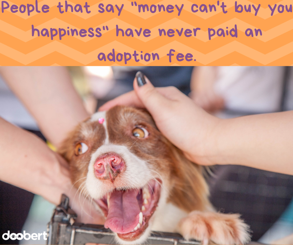 People that say money can't buy you happiness have never paid an adoption fee.