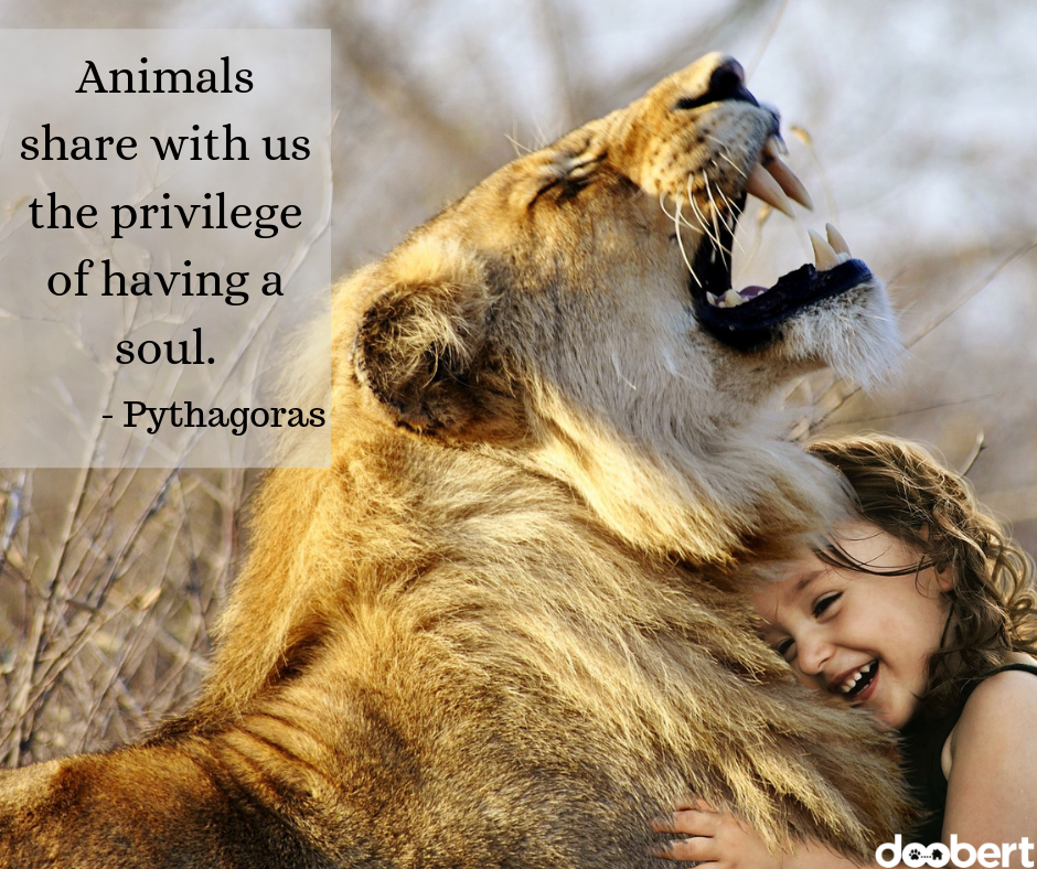 Animals share with us the privilege of having a soul - Pythagoras
