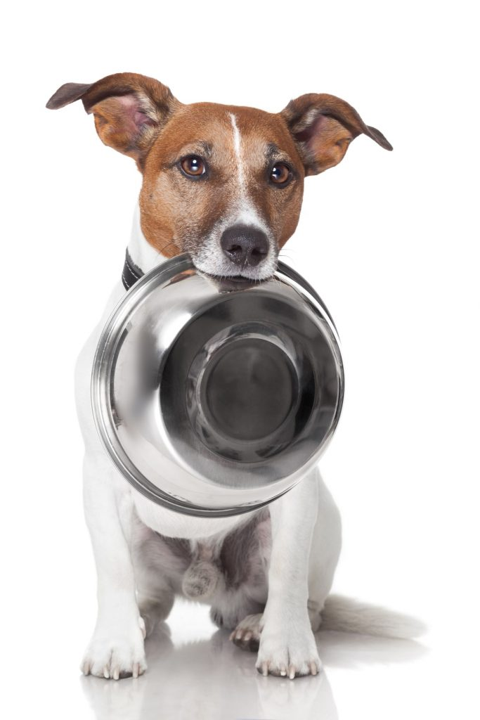 Dog-with-empty-food-bowl