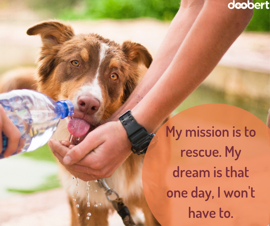 My mission is to rescue. My dream is that one day, I won't have to.