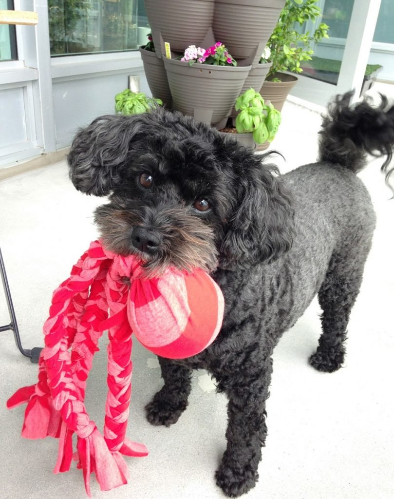 DIY Doggie Tug Toy