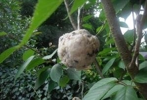 Homemade Bird Feeder Suet Cakes