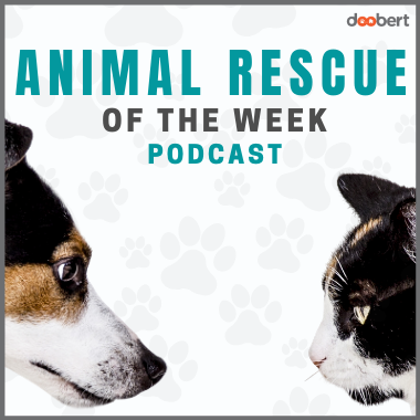 Cover Doobert Animal Rescue of the Week Podcast