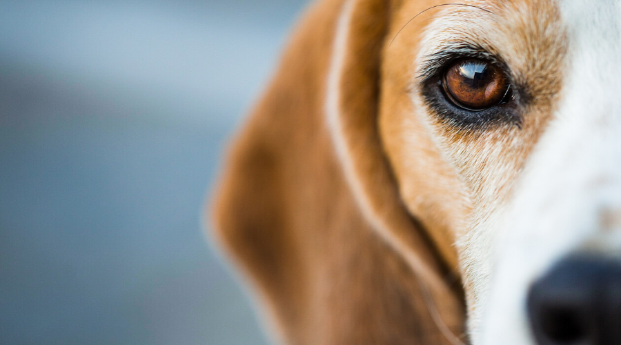 7 Things You Can Do to Help End Animal Testing