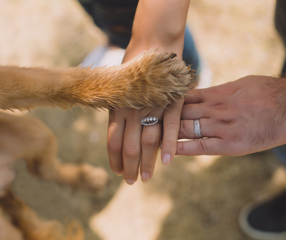5 Reasons Why Volunteering at an Animal Shelter Is Good for the Soul