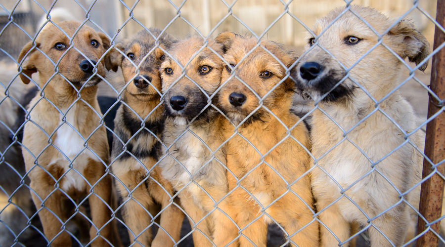 5 Ways to Help Your Local Animal Shelter During the COVID-19 Pandemic