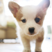 National Puppy Day: 5 Ways to Celebrate While Under Quarantine
