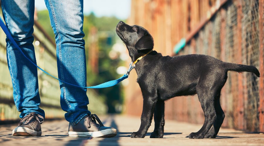 Is It Okay to Take Your Dog for A Walk in the Park?