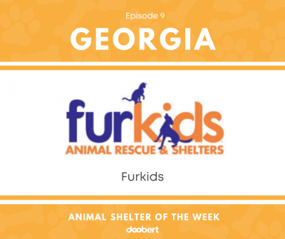 FB 09. Furkids_Shelter of the Week