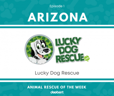 FB 1. Lucky Dog Rescue_Animal Rescue of the Week