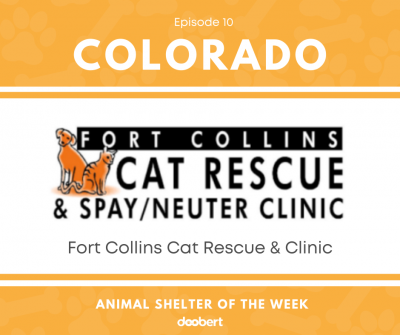 FB 10. Fort Collins Cat Rescue & Clinic_Shelter of the Week