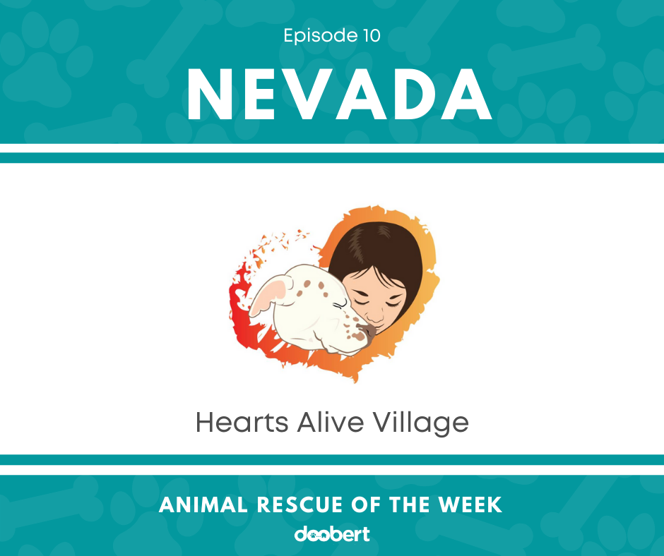 FB 10. Hearts Alive Village_Animal Rescue of the Week