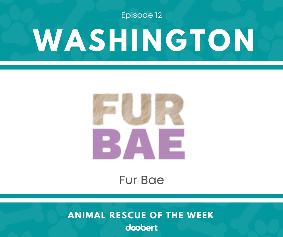 FB 12. FUR BAE_Animal Rescue of the Week