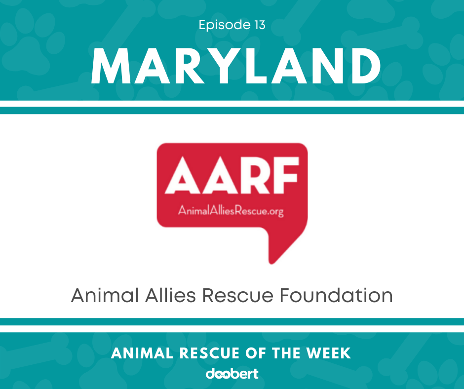 FB 13. Animal Allies Rescue Foundation_Animal Rescue of the Week