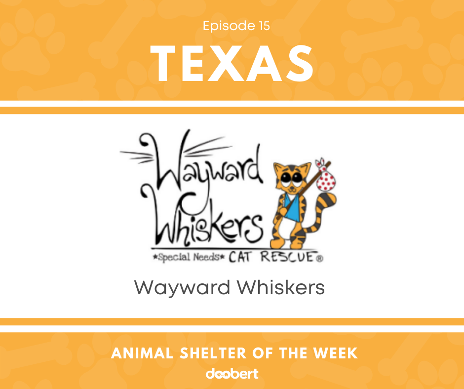 FB 15. Wayward Whiskers_Animal Shelter of the Week