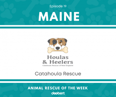 FB 19. Catahoula Rescue_Animal Rescue of the Week
