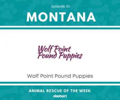 FB 20. Wolf Point Pound Puppies_Animal Rescue of the Week