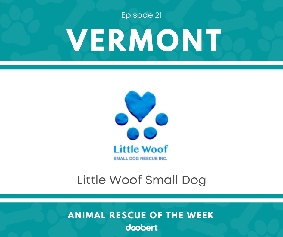 FB 21. Little Woof Small Dog_Animal Rescue of the Week
