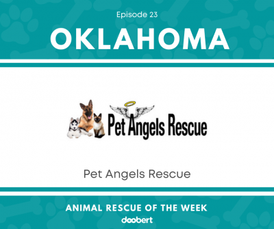 FB 23. Pet Angels Rescue_Animal Rescue of the Week
