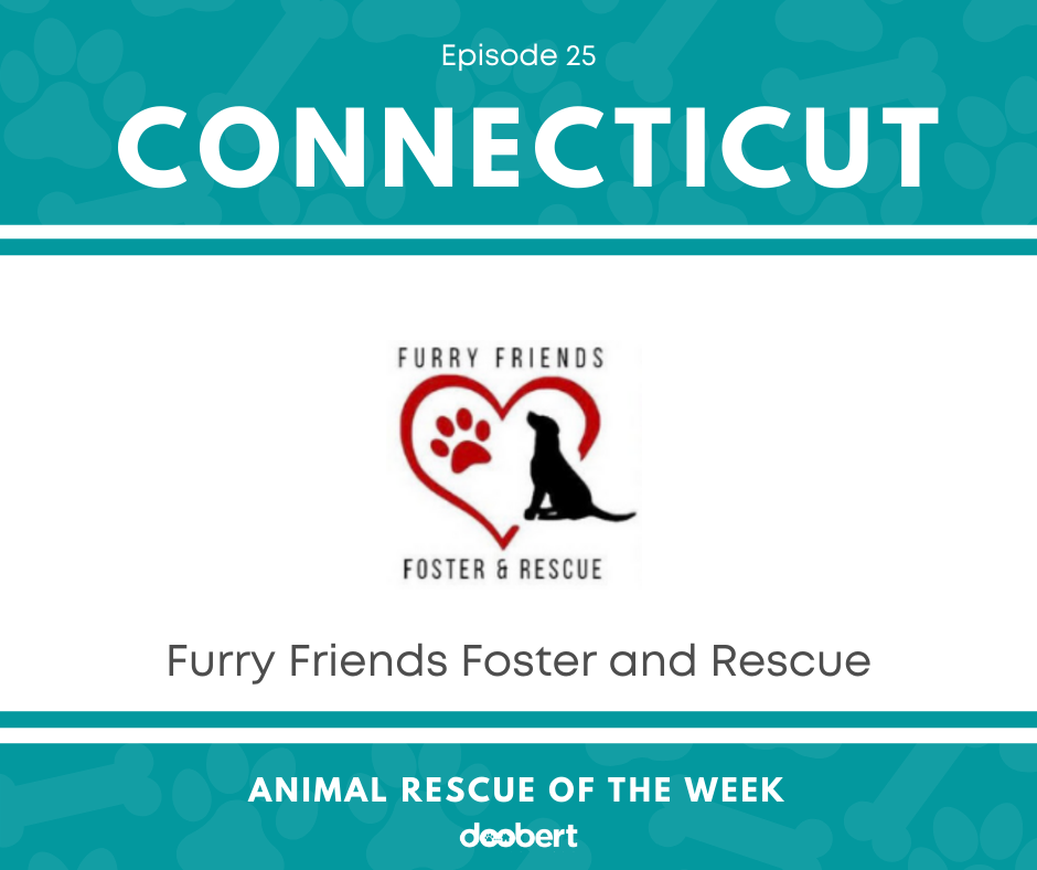 FB 25. Furry Friends Foster_Animal Rescue of the Week