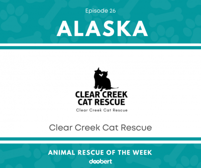 FB 26. Clear Creek Cat Rescue_Animal Rescue of the Week