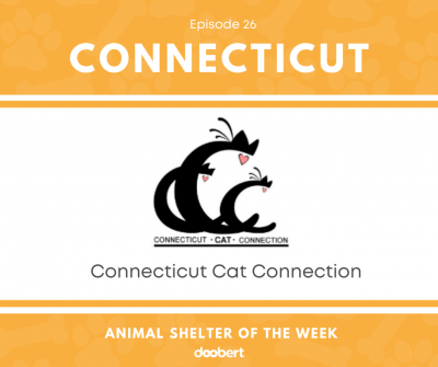 FB 26. Connecticut Cat Connection_Animal Shelter of the Week