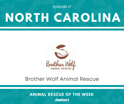FB 27. Brother Wolf Animal Rescue_Animal Rescue of the Week