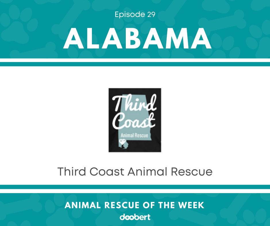 FB 29. Third Coast Animal Rescue_Animal Rescue of the Week