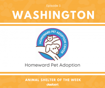 FB 3. Homeward Pet Adoption_Shelter of the Week