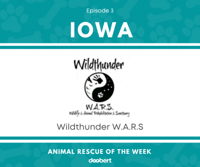 FB 3. Wildthunder W.A.R.S_Animal Rescue of the Week