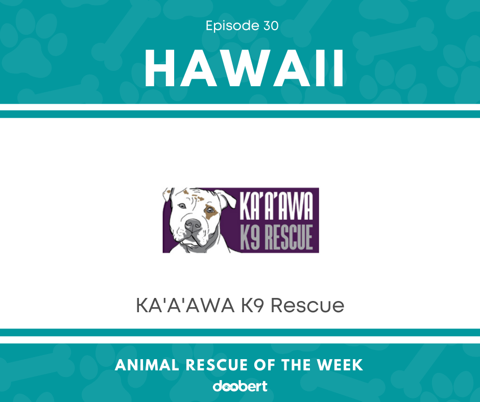 FB 30. Ka'a'awa K9 Rescue_Animal Rescue of the Week