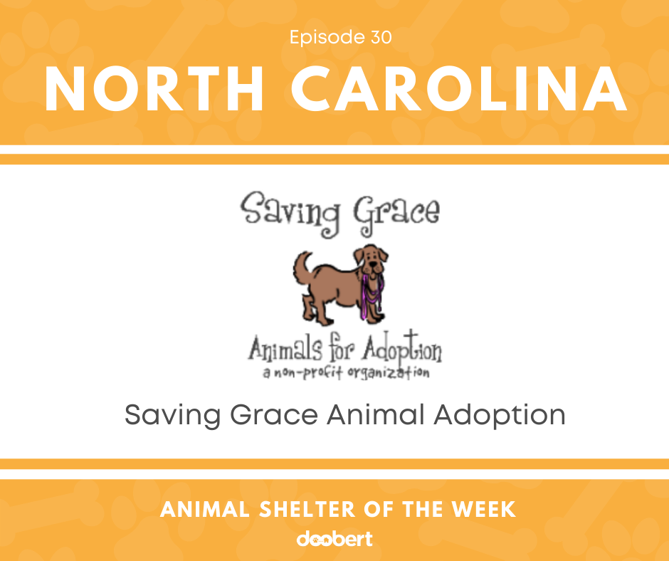 FB 30. Saving Grace Animal Adoption_Animal Shelter of the Week
