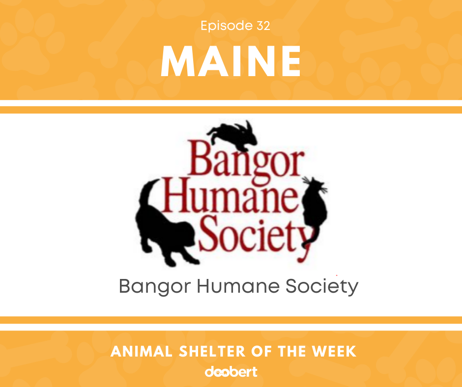 FB 32. Bangor Humane Society_Animal Shelter of the Week