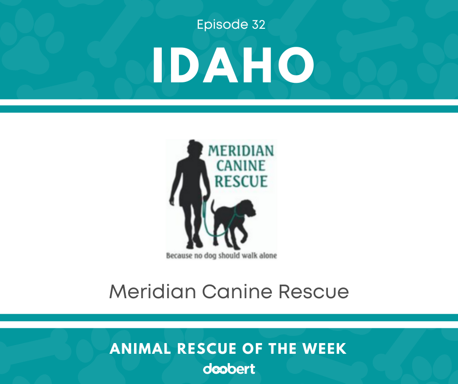 FB 32. Meridian Canine Rescue_Animal Rescue of the Week