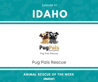 FB 33. Pug Pals_Animal Rescue of the Week