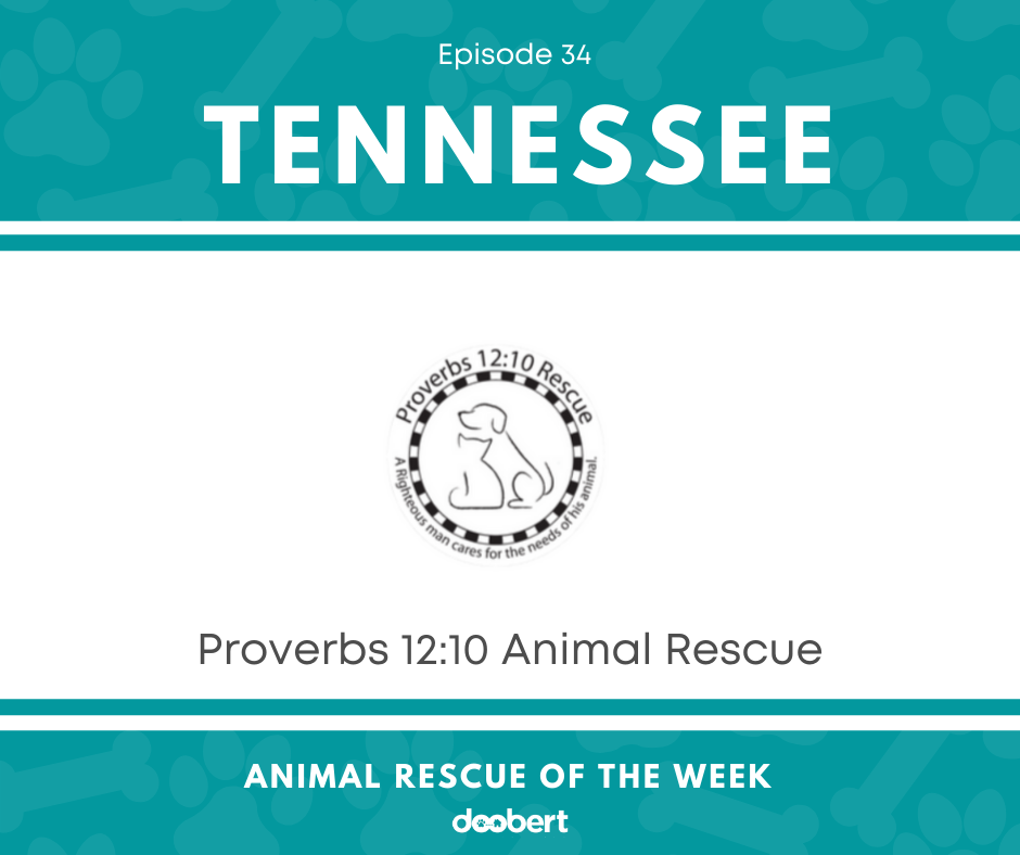 FB 34. Proverbs 12_10 Rescue_Animal Rescue of the Week