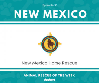 FB 36. New Mexico Horse Rescue_Animal Rescue of the Week