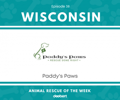 FB 38. Paddy's Paws_Animal Rescue of the Week
