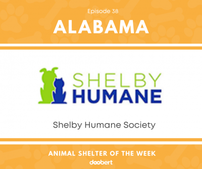 FB 38. Shelby Humane Society_Animal Shelter of the Week width=