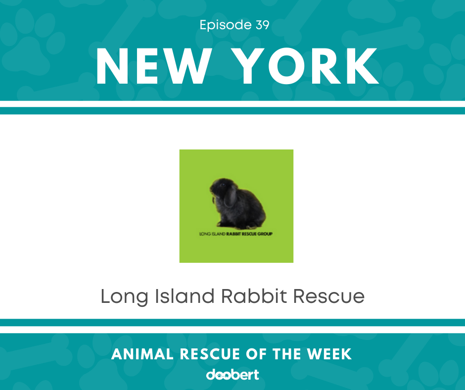 FB 39. Long Island Rabbit Rescue Group_Animal Rescue of the Week