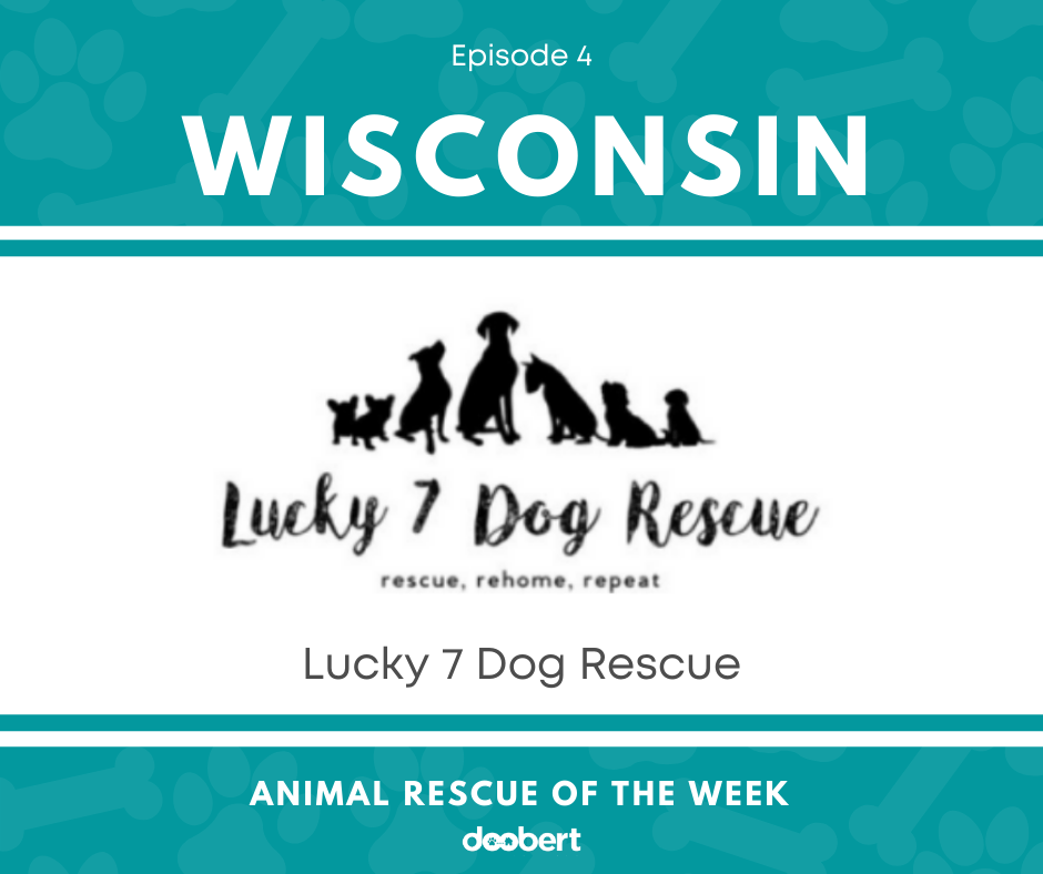 FB 4. Lucky 7 Dog Rescue_Animal Rescue of the Week