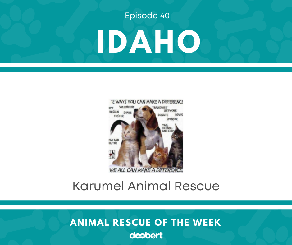FB 40. Karumel Animal Rescue_Animal Rescue of the Week