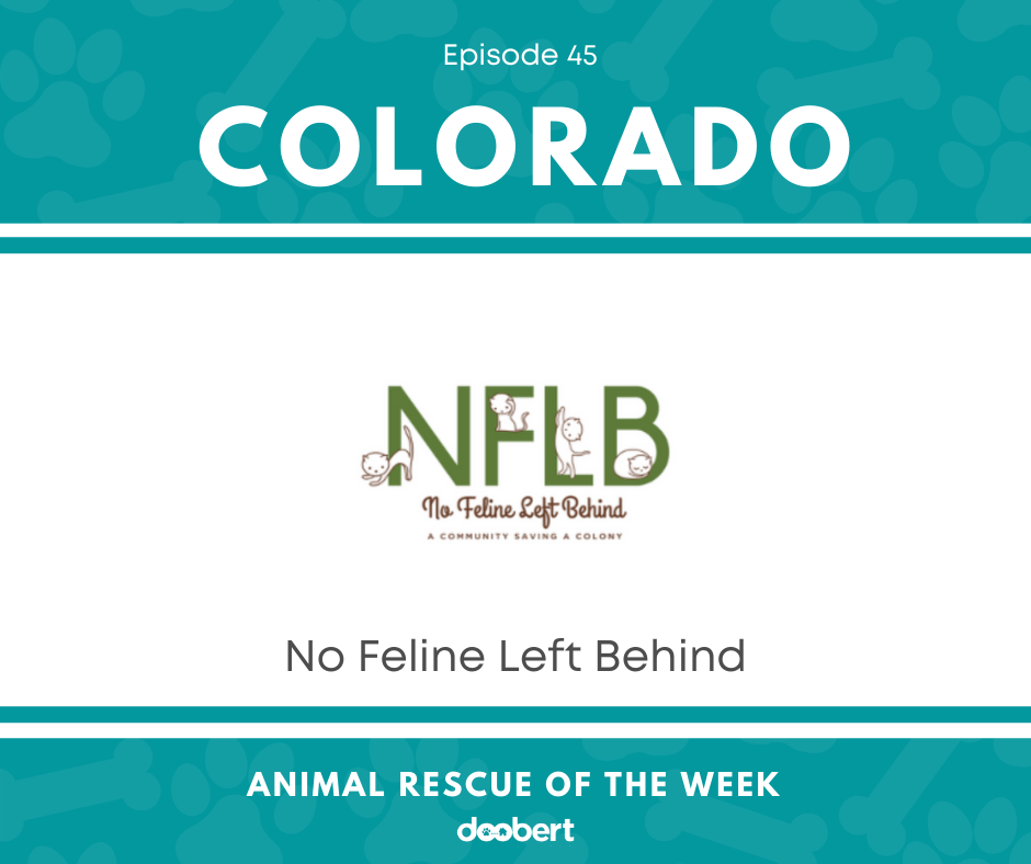 FB 45. No Feline Left Behind_Animal Rescue of the Week