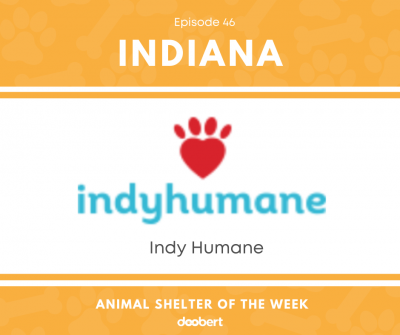 FB 46. Indy Humane_Animal Shelter of the Week