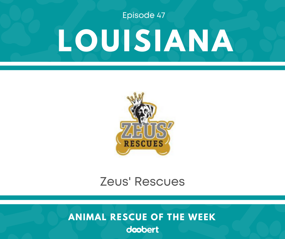 FB 47. Zeus' Rescues_Animal Rescue of the Week