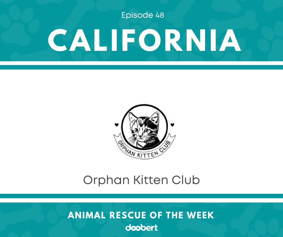 FB 48. Orphan Kitten Club_Animal Rescue of the Week