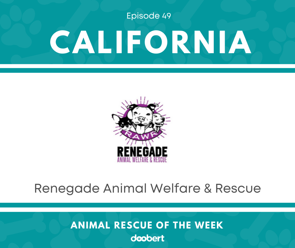 FB 49. Renegade Animal Welfare & Rescue_Animal Rescue of the Week