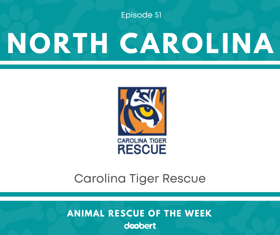 FB 51. Carolina Tiger Rescue_Animal Rescue of the Week