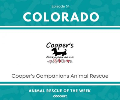 FB 54. Cooper's Companions Animal Rescue_Animal Rescue of the Week